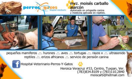 Hospital Veterinario Perros y Gatos