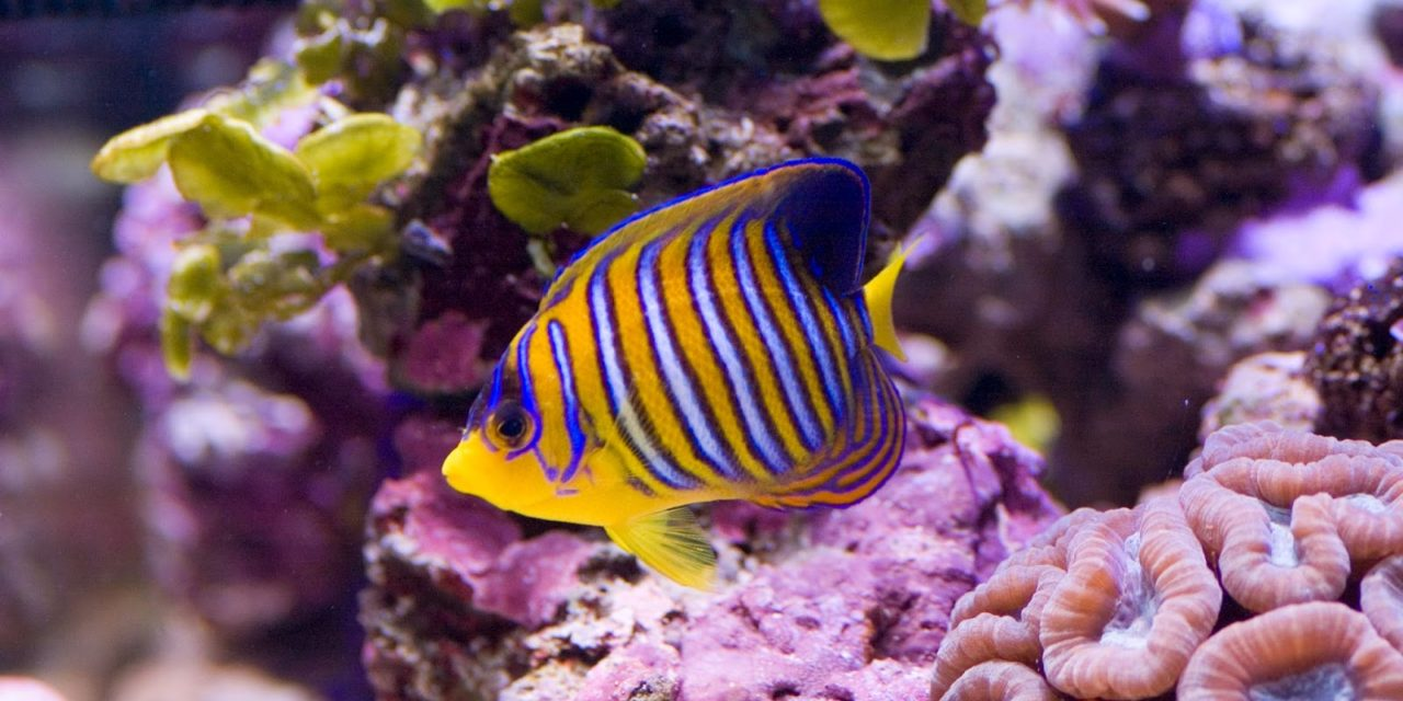 Alimentacion y Mantenimiento de su pez