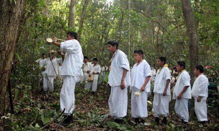 Encabezan maestros tradicionales y niños Voladores la Ceremonia de corte, arrastre y siembra del Palo Volador