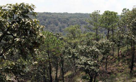 Temporada de sequía no dejó afectaciones