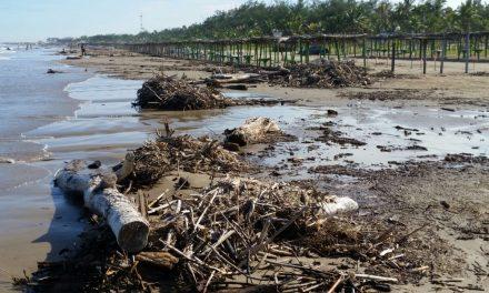 Continúa arribando palizada a playas de Tuxpan