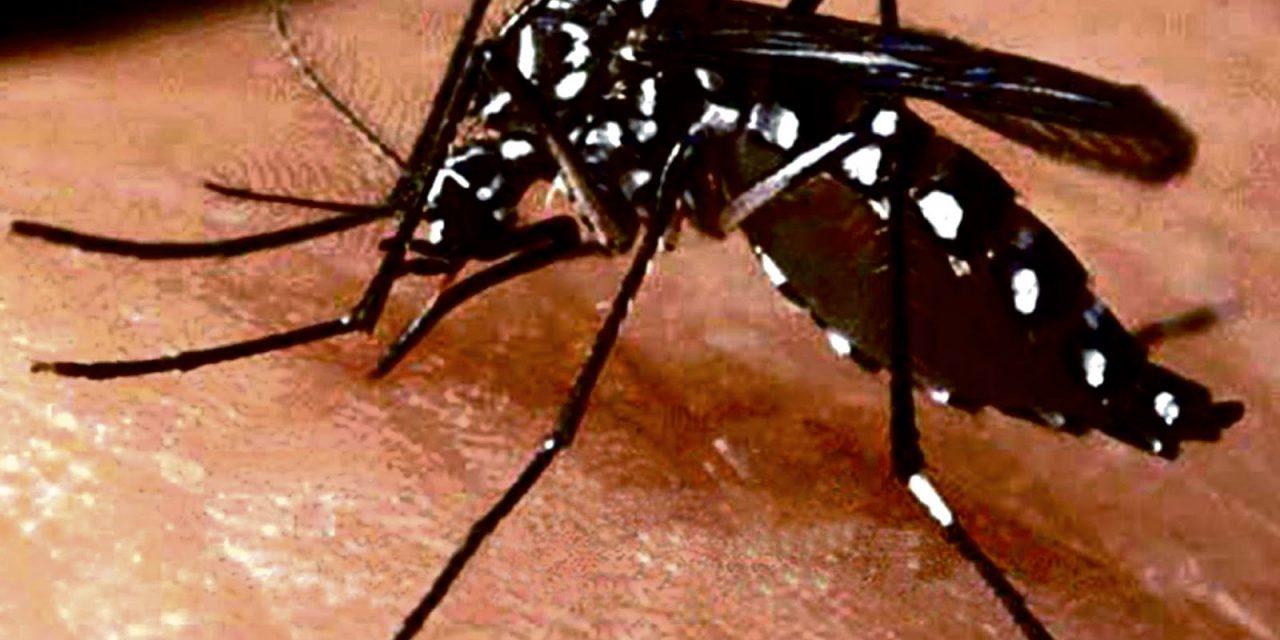Continúa la alta incidencia de casos de Dengue, Zika y Chikungunya