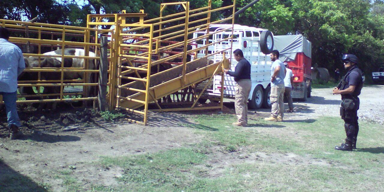 Abigeato obliga a ganaderos a dedicarse a otras actividades