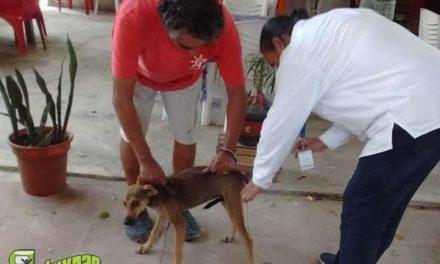 Continúa la vacunación antirrábica en Tuxpan