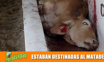 ESTABAN DESTINADAS AL MATADERO