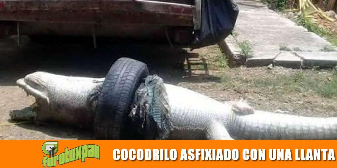 COCODRILO ASFIXIADO