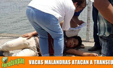 VACAS MALANDRAS NO TIENEN PALABRA Y ARROLLAN A UN TRANSEUNTE