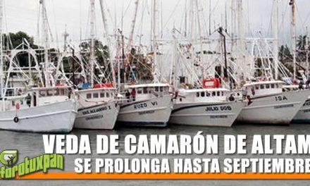 VEDA DE CAMARÓN DE ALTAMAR SE PROLONGA