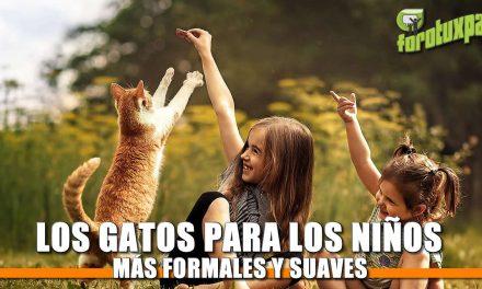 Los gatos, para los niños más formales y suaves