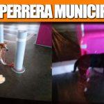 LA PERRERA MUNICIPAL