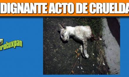INDIGNANTE ACTO DE CRUELDAD