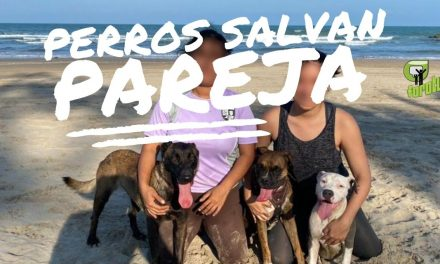 Perros salvan a pareja de ser ASALTADA