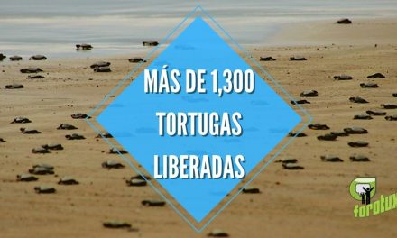 MÁS DE 1,300 TORTUGAS LIBERADAS