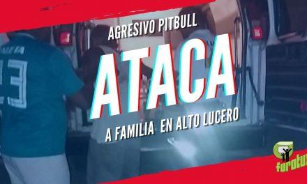 AGRESIVO PITBULL ATACA A FAMILIA ALTO LUCERO