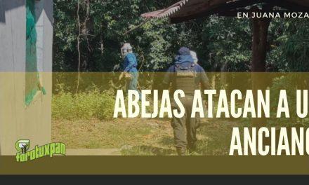 Abejas atacan a OCTAGENARIO